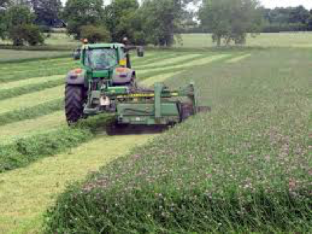CSA Land Van Duwijck - Biologische teelt - Grasklaver