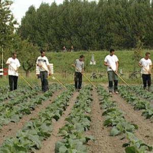 CSA Land Van Duwijck - Biologische teelt - Onkruid bestrijden
