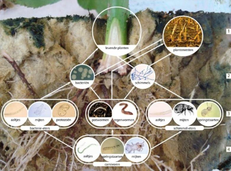 CSA Land Van Duwijck - Biologische teelt - Stalmest