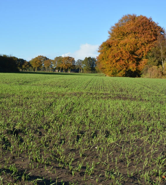 CSA Land Van Duwijck - Biologische teelt - Winterrogge