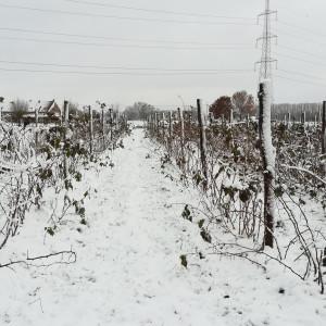 kleinfruit_sneeuw_small