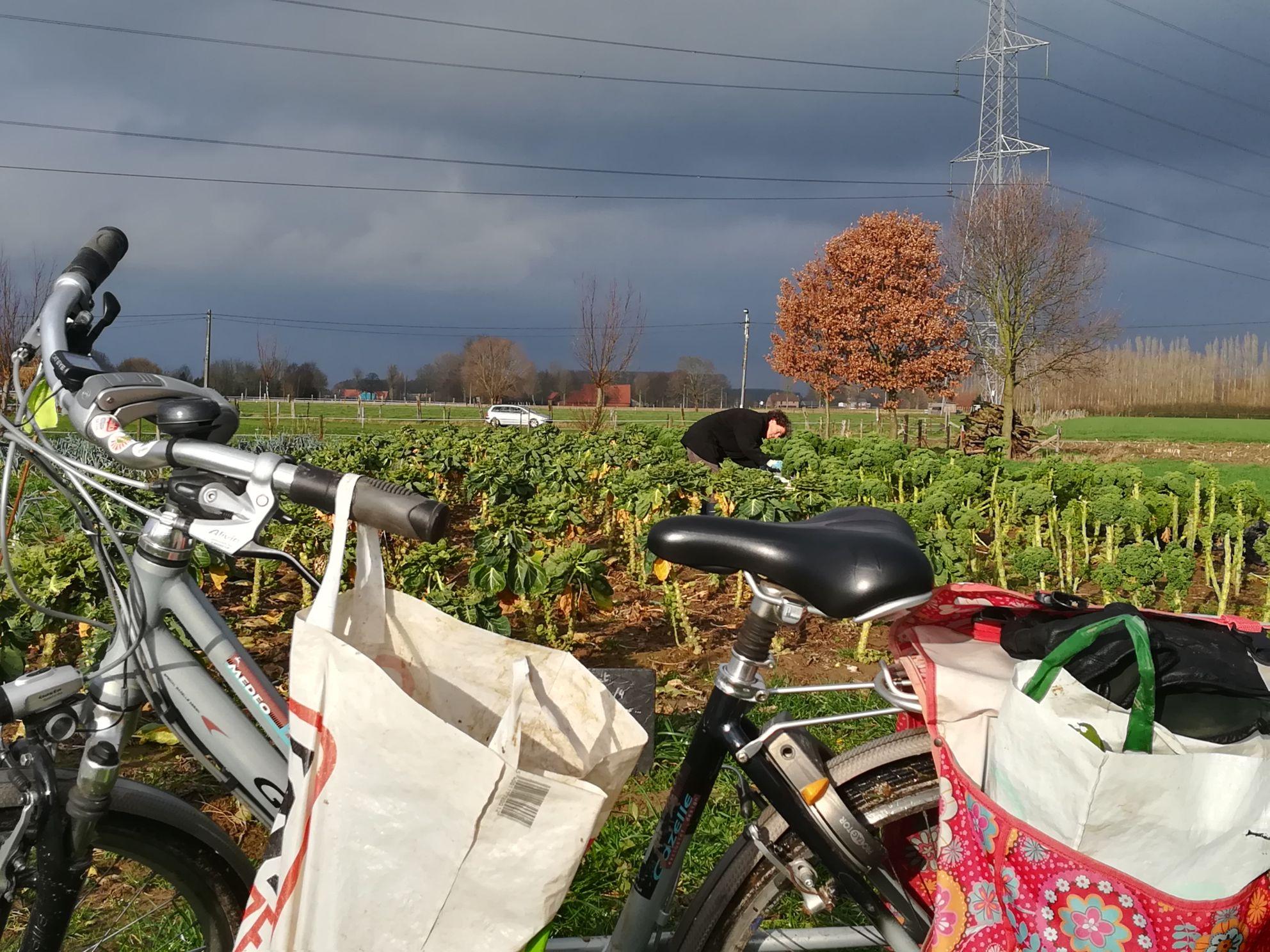 Met de fiets over het veld voor de winteroogst. Het kan weer!