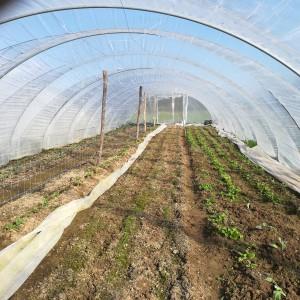 tunnel 4 op 1 april: bloemkool, spitskool, peultjes/erwtjes, wortelkiempjes, radijs