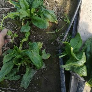 na het oogsten onkruid verwijderen ;-) merci!