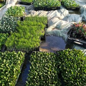 het plantgoed wacht al 2 weken om geplant te worden..