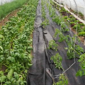 28 april: de eerste tomatenplanten zitten erin