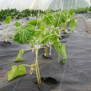 eerste 24 komkommerplanten 27 april