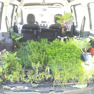 jungle in my car: de kruidenplantjes