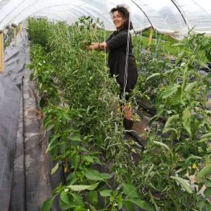 bio-landbouwstagaire Yamina na een dag van renovatiewerken in de tomaten-en paprika tunnel