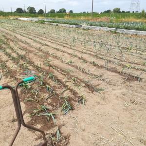 opdracht volbracht dag 1, 4000 planten