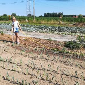 6000 preiplantjes moeten op 2 dagen de grond in wegens blote wortel