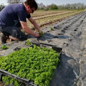 na het lichten van de grondankers en het rooien van de spruitenplanten nog n bakje peterselie steken, bedankt!