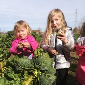 nieuwe gezinnen helpen de winteroogst op te werken