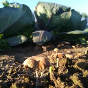 compost + regen = paddestoel :-)