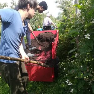 compost opvoeren met Dante en Dylax