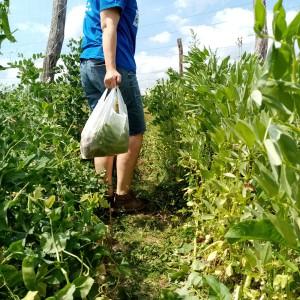 zak vol tuinboon en erwten, voor een hoofdmaaltijd voor 2 personen