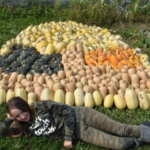 oogst van 4mX35m = 150m², ca 300 pompoenen van gem. 2kg--> 4kg/m²