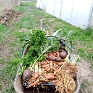 februari-oogst voor 2 weken met een groot gezin