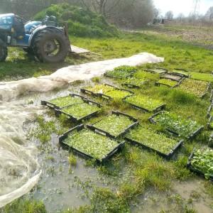 Plantgoed van de opkweker, wachtend tot de grond wat droogt.
