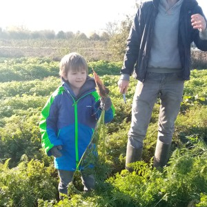 worteltjes oogsten in oktober