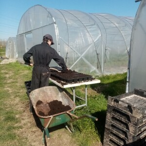coronaweek 2, maart 2020, tomatenplantjes verspenen