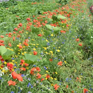uit de bloemenweide kan vrij geplukt worden om het 12stelen boeket aan te vullen