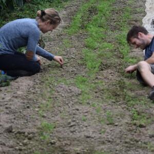 worteltjeswieden voor oogst in 2021 (experimentje)