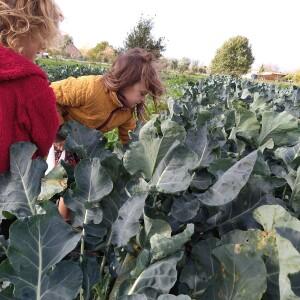 robin&loanne_broccoliplukken_profieltjes