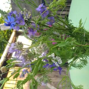 boeket juni paars-blauw